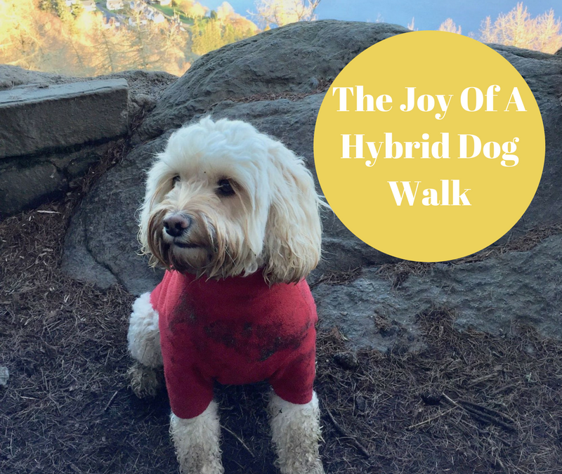 The Joy Of A Hybrid Dog Walk