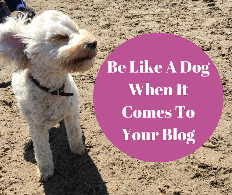 Be Like A Dog When It Comes To Your Blog